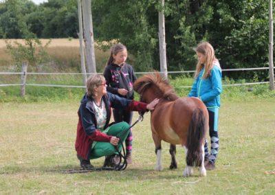 angebote auf dem hof - Kinder- und Ponybeschaeftigung